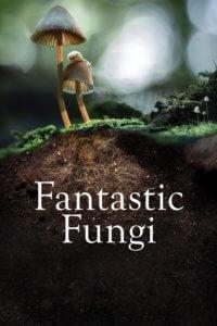เห็ดมหัศจรรย์ Fantastic Fungi (2019)